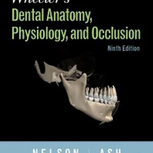 Test Bank for Wheeler's Dental Anatomy, Physiology and Occlusion 9th Edition Nelson