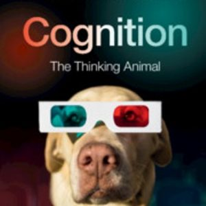 Test Bank for Cognition The Thinking Animal 4th Edition Willingham
